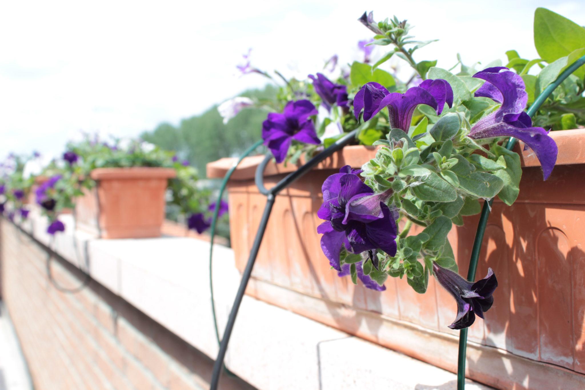 Guida: Come creare un impiando di irrigazione da balcone