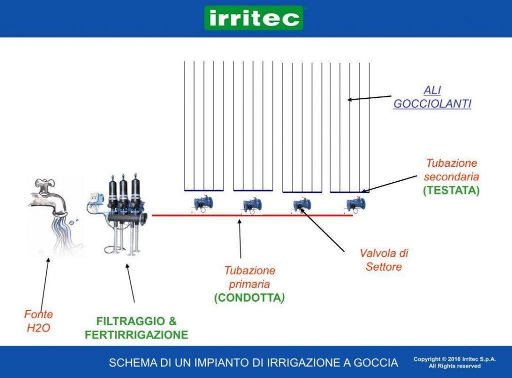 Schema Irrigazione per Vigneto