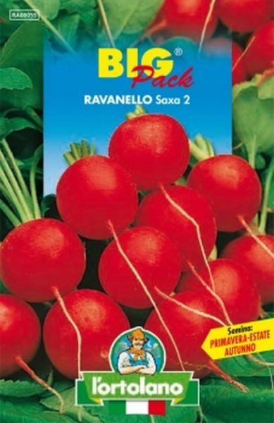 Semi di Ravanello Saxa 2