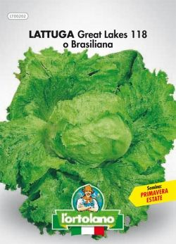Lattuga GREAT LAKES O BRASILIANA