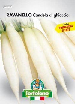 Semi Small di Ravanello Candela di Ghiaccio