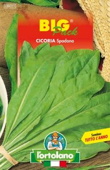 Semi di Cicoria Spadona