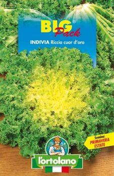 """Semi di Indivia Riccia """"Cuor d'oro"""""""