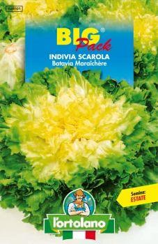 Semi di Indivia Scarola Batavia Maraichère