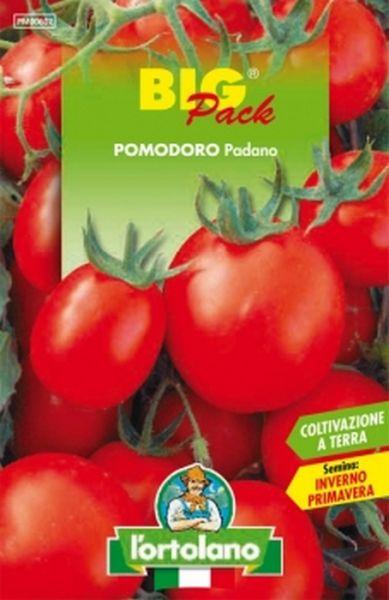 Semi di Pomodoro Padano