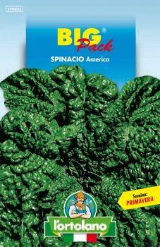 Semi di Spinacio America