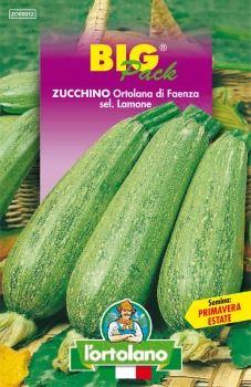 Semi di Zucchino Ortolana di Faenza
